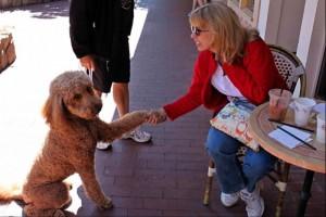 Formal Carmel canine presentation to Lady Lorri Ellen