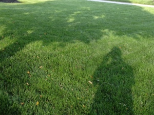 Front lawn, where usually grass goes to die each Summer