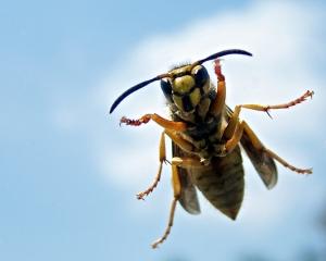 hunter-killer terrorist hornet