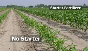 If it works on the corn ... (Picture from mississippi-crops.com)