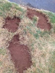 Front lawn damage