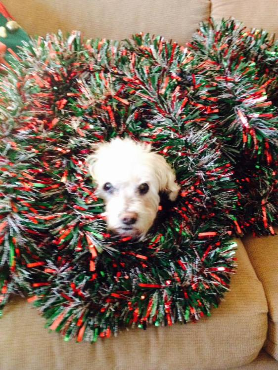 You could never trust her to properly decorate the Christmas tree. But she was a good and loyal dog!
